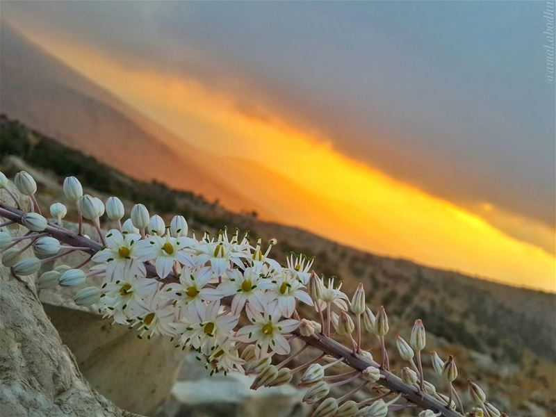 📷🌄🍃🌸 sunsets proof that endings are beautiful too 👌 (Hasbaya District)