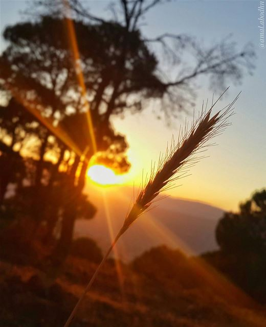 📷🌄🍃🌳 sunsets proof that endings are beautiful too 👌 (Hasbaya Home)