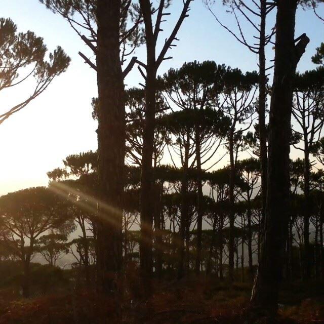 marwankhoury pine way sunset trees majdi car hasbaya friends ...