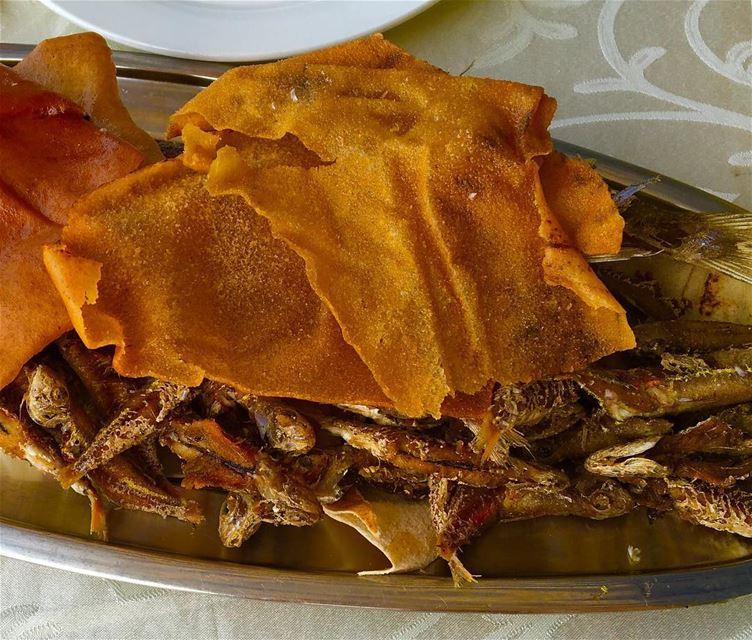 العشاء سردين sardines sea fish ... (سلطان ابراهيم)