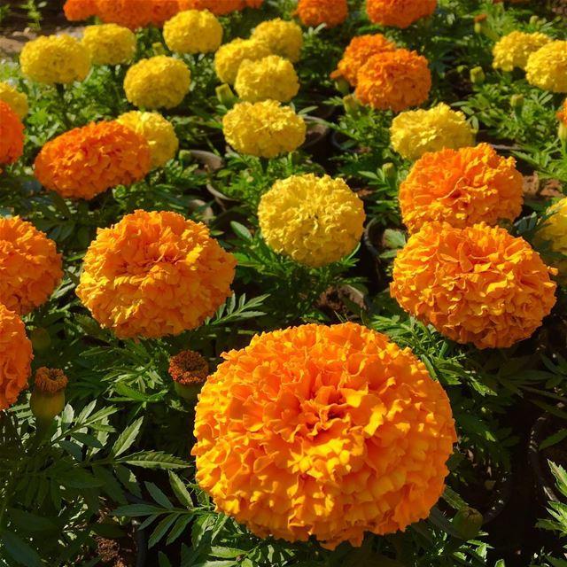 flower flowerstagram lebanon lebanon24 lebanon_hdr wearelebanon ...