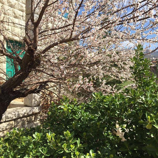 Hello Spring !! 🌺💐🌸🌷☀️ livelovebeirut wearelebanon lebanon... (Bois-de-Boulogne)