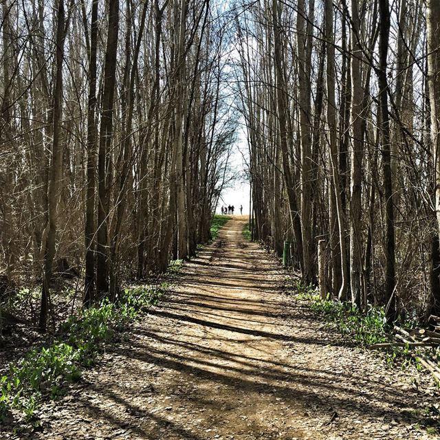 Every road has an ending, but in life, every ending is a new beginning 🌲🌳 (Jesuit Convent Deyr Taanayel - دير سيدة التعزية للآباء اليسوعيين)