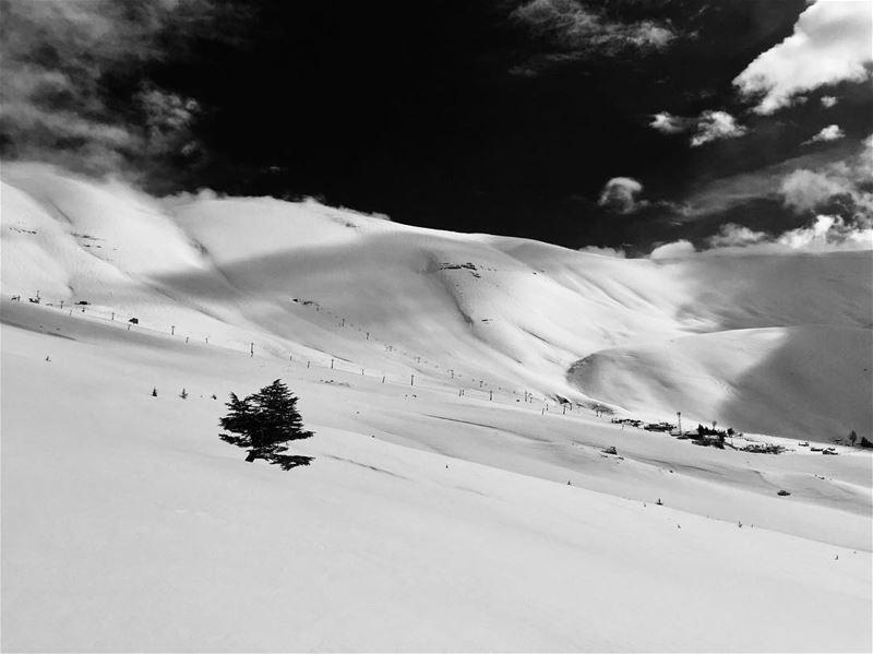 Black & white for a stormy Friday!.... Black&White lonlytree ... (Téléskis des Cèdres - Cedars Ski Resort - Arz)