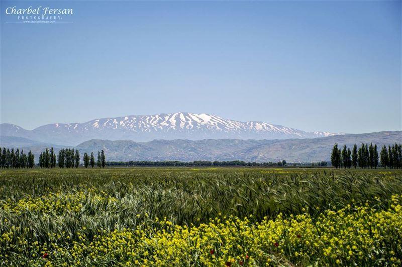 Spring vibes 🌼 tb instashot photooftheday picoftheday like4like ... (Taanayel- Bekaa)