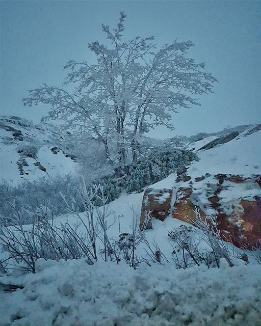 Frozen Tree at tarshish Snow Season winter ... (Tarshish)