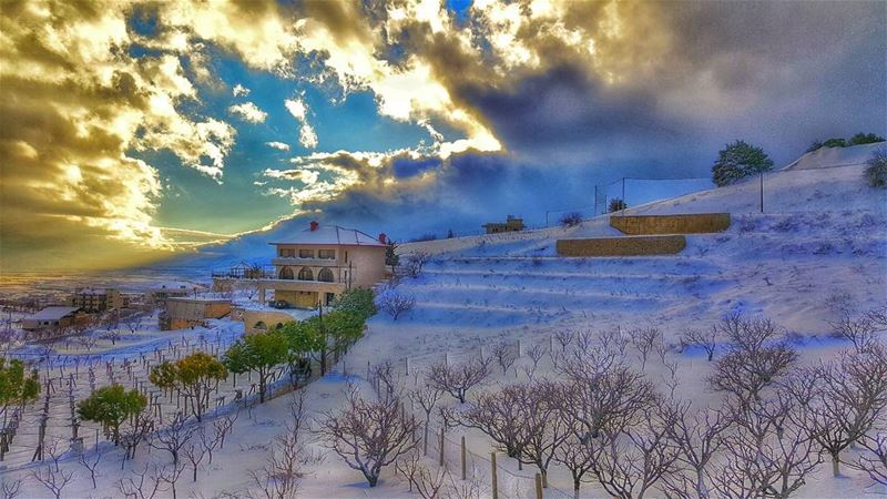 Zahle zahlelebanon snow 2016 tree like4like followforfollow ... (Dhour Zahle)
