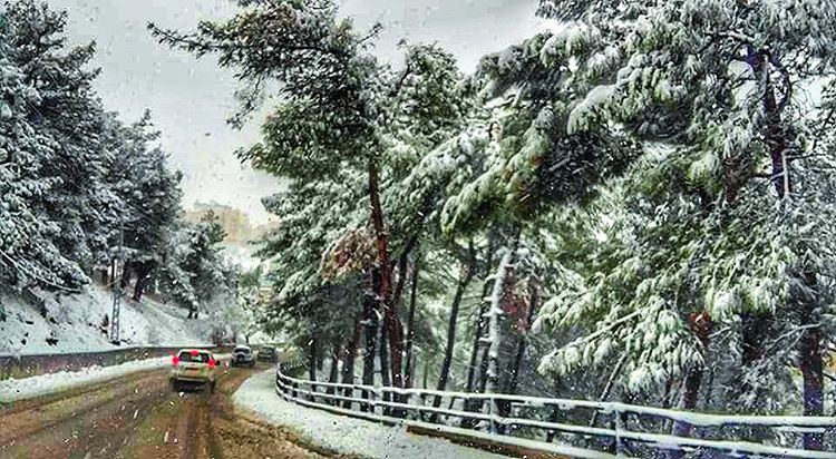 Zahle zahlelebanon snow 2016 tree like4like followforfollow ... (Zahlé, Lebanon)