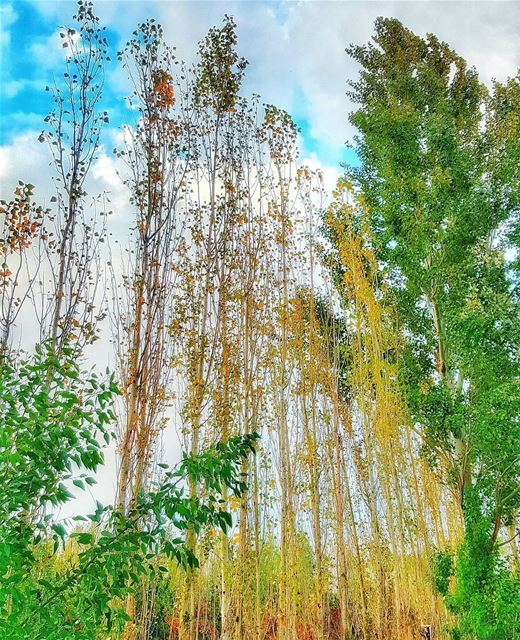 Autumn is a second spring when every leaf is a flower. ig_lebanon ... (Deïr Taanâyel, Béqaa, Lebanon)