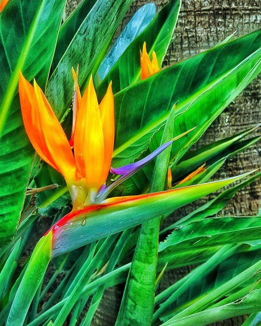 The bird of paradise alights only upon the hand that does not grasp..... (Deir El Zahrani)