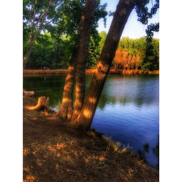 Aiming for Peace ? Taanayel Nature Lake Bekaa Bekaavalley Zahle ... (Taanayel Lake)