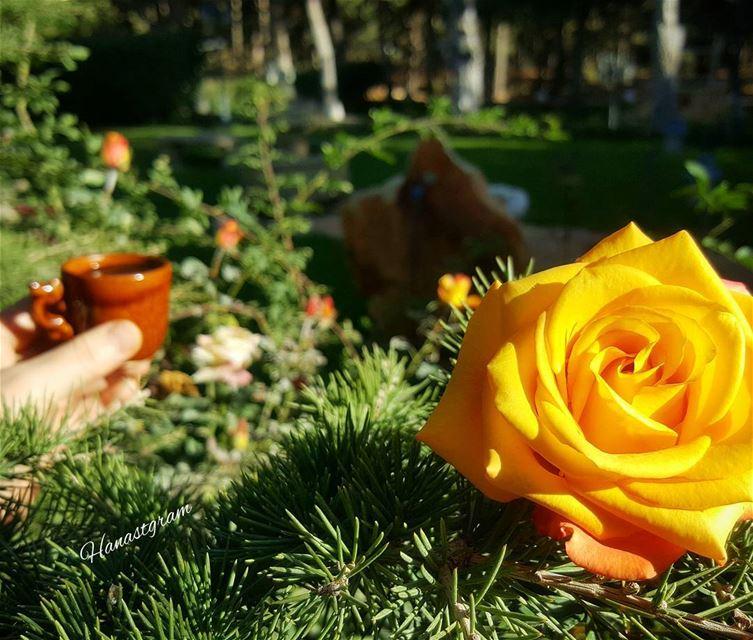 صباح الورد بعز البرد .....🌞 livelebanon mylebanon🇱🇧 قهوة_الصباح صباحك