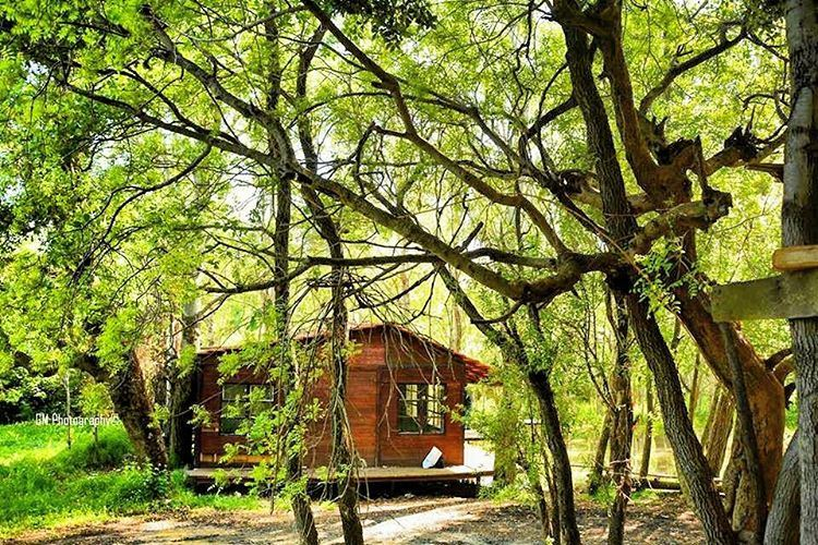 A dream house in the woods... Don't you wish you could live there?