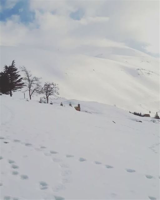 lebanoninapicture snow mountains awesomeshots livelovelebanon ... (Cedars of God)