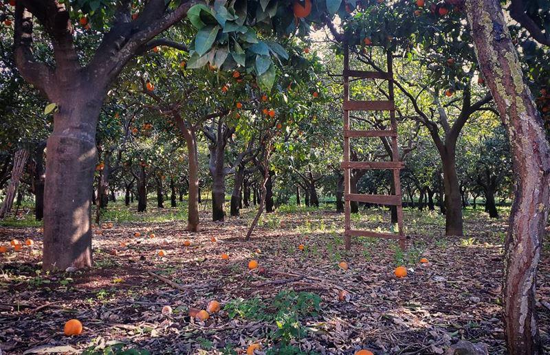roamtheplanet nationalart mynextparadise driveslate livelovelebanon ... (Zgharta)