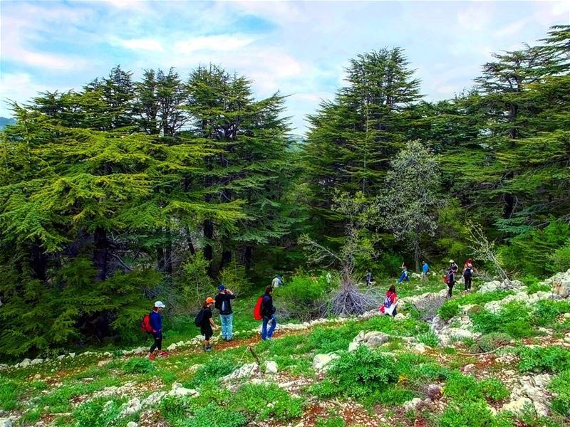 hiking explorelebanon livelovelife livelovelebanon livelovelaugh ... (Tannourine Cedars Nature Reserve)