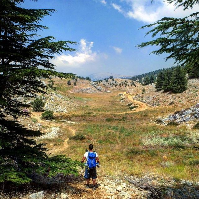 hiking explorelebanon livelovelife livelovelebanon livelovelaugh ... (Al Shouf Cedar Nature Reserve)