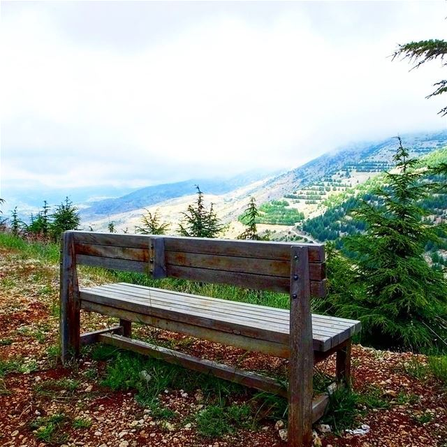 Believe all the possibilities are inside of you, Believe they are OUTside... (Al Shouf Cedar Nature Reserve)