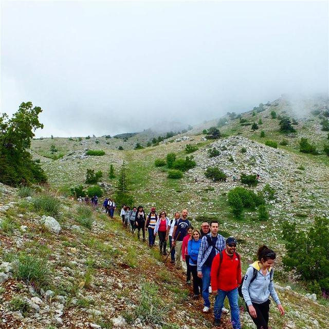 HIKING IN SHOUF CEDAR FOREST IS ALWAYS REFRESHING ❤ hiking ... (Al Shouf Cedar Nature Reserve)