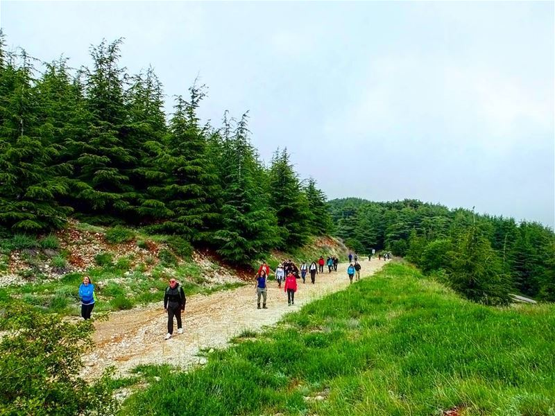 hiking explorelebanon livelovelife livelovelebanon livelovelaugh ... (Shouf Biosphere Reserve)