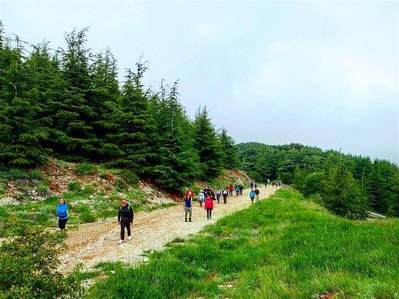 hiking explorelebanon livelovelife livelovelebanon livelovelaugh ... (Shouf Biosphere Reserve)