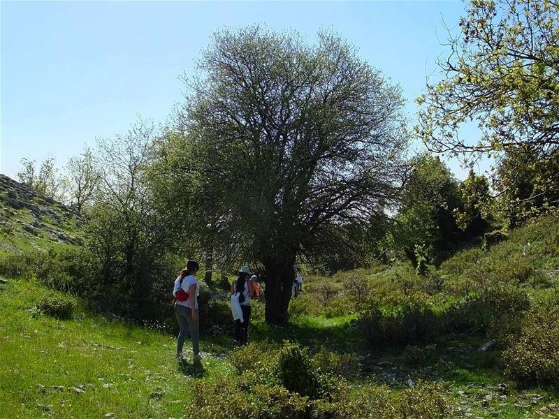greenculture hiking jaj jbeil byblos northlebanon amazinglebanon ... (Jaj-Jbeil)