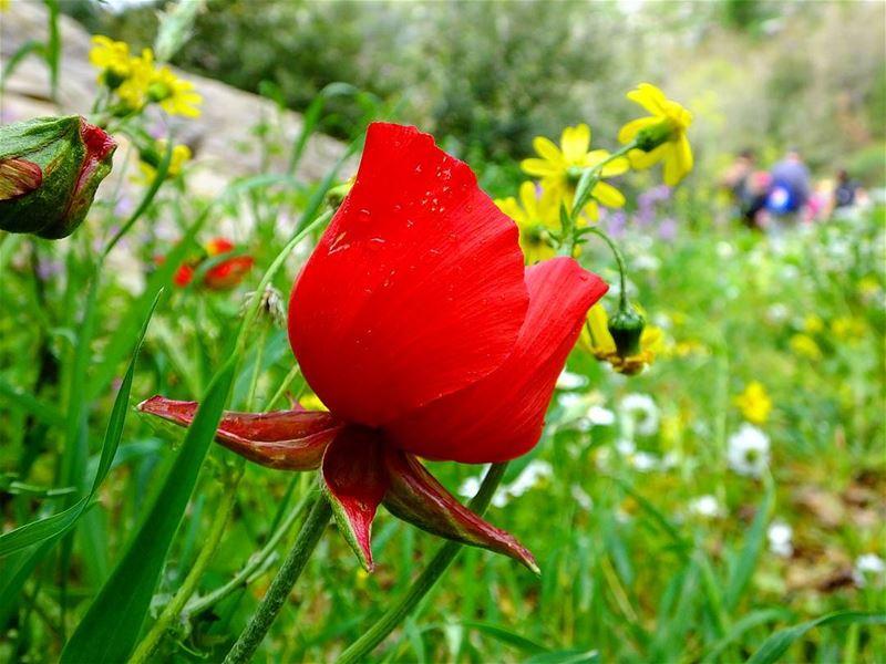 hiking mokhtara shouflebanon shouf flowers sunlight nature ... (Mokhtara)