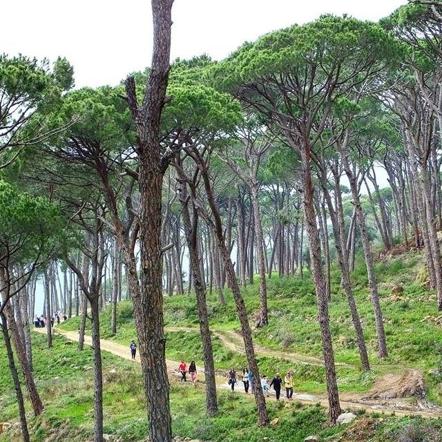 hiking deirelharf lebanon green culture backpacking travel outdoor... (Deir El Haref)