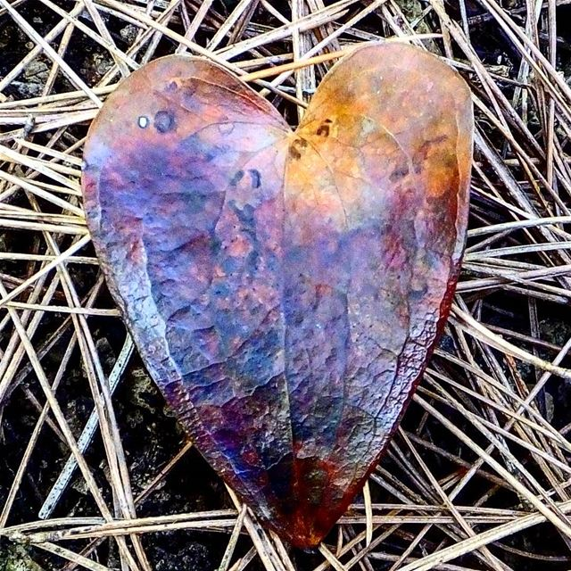 In the heart of nature, there is a lonely heart, connected with earth...