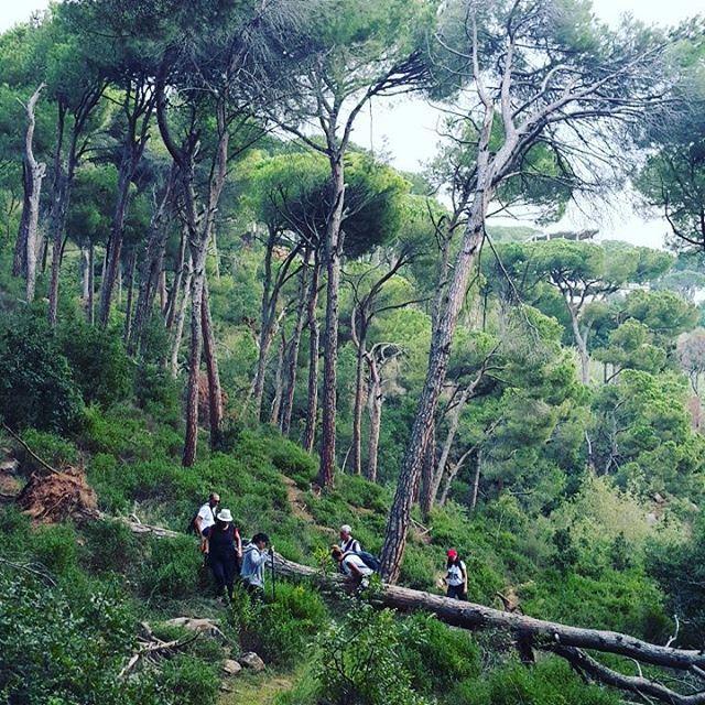 promaxsports hiking lebanese trails hikinglebanon green culture ... (Grand Hills Village Hotel & Spa Broumana)