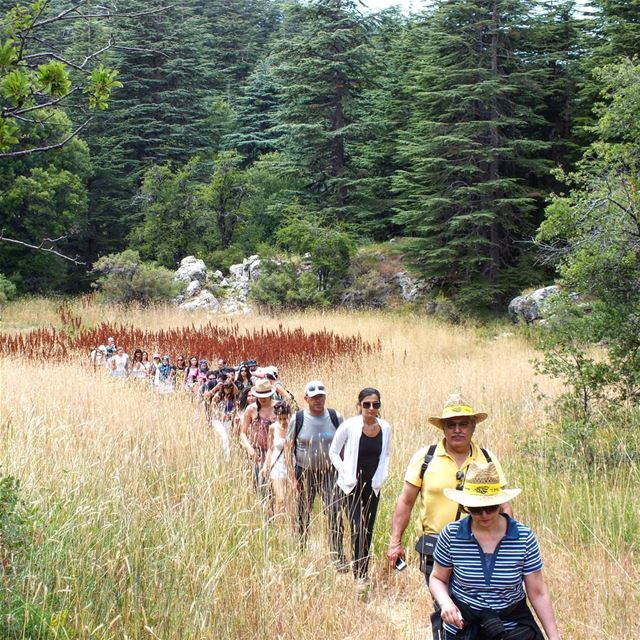 ehden hikes green travel trees nature culture hiking holidays ...