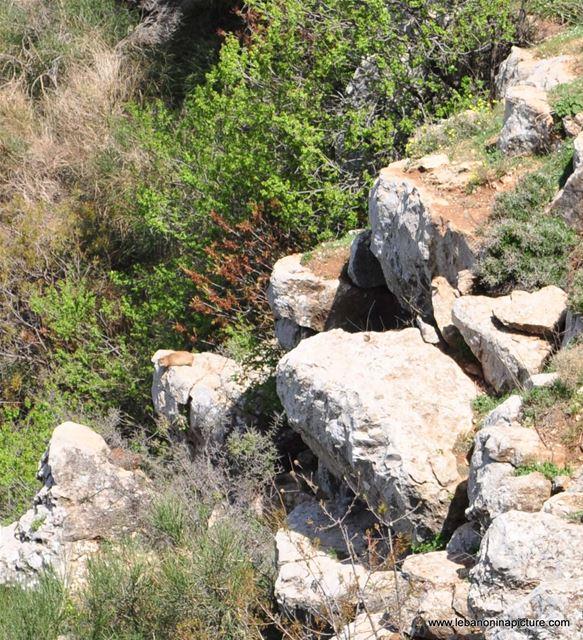 Chouf Bioshphere Reserve Niha Fort