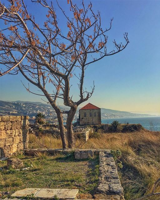 I have found both freedom and safety in my madness; the freedom of... (Byblos - Jbeil)