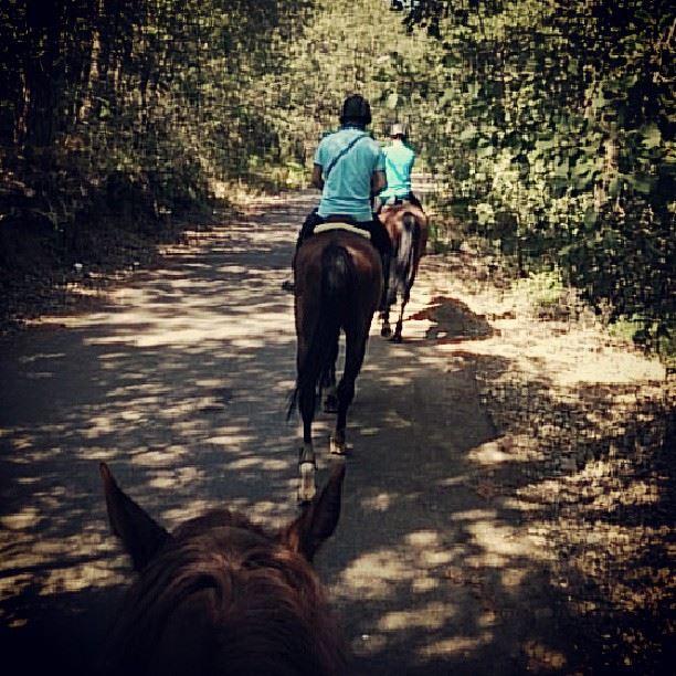 sumday horse riding ...