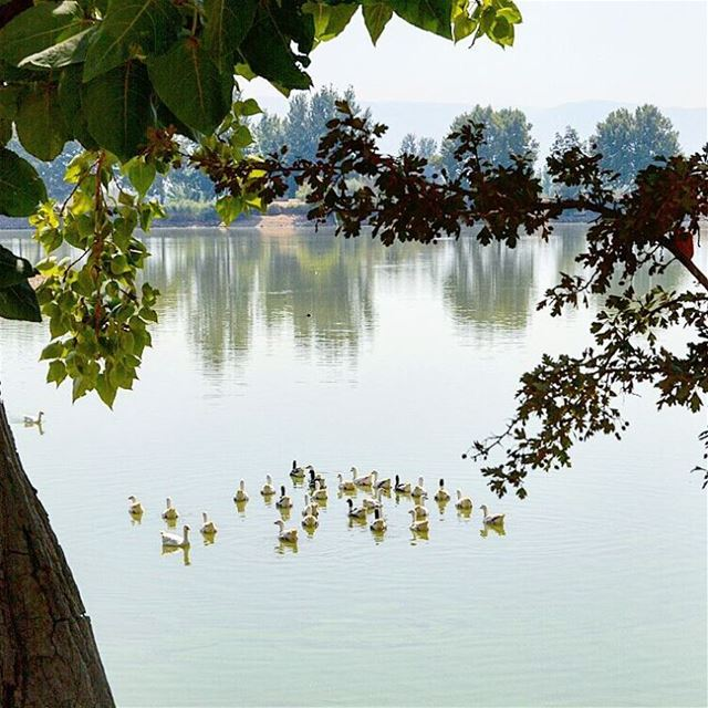 """Be like a duck. Calm on the surface,but always paddling like dickens... (Lac De Taanayel)"