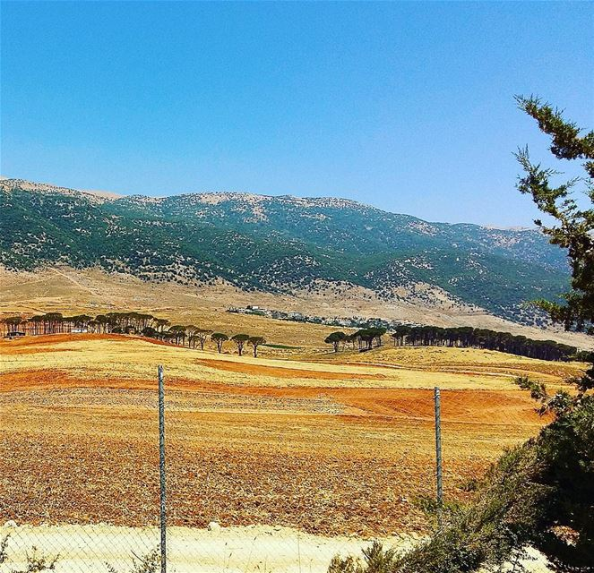 Farm farmland pinetrees mountains mountainsoflebanon beautyofnature ...