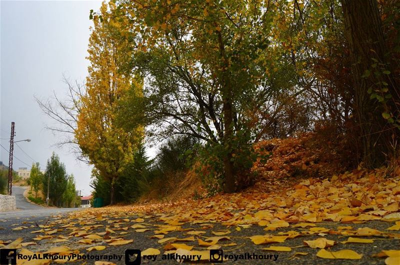 ehden  liveloveehden  livelovelebanon  RoyALKhouryPhotography  fall ...