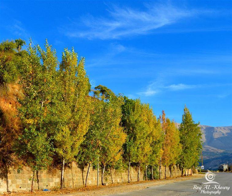 bsharre livelovebsharreh livelovecedars livelovelebanon fall2015 ... (Bsharri, Lebanon)