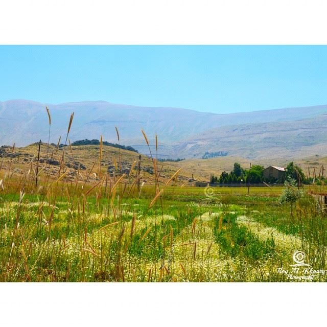 lebanon natureBy ... (Cedars of God)
