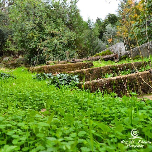 RoyALkhouryPhotography beautifullebanon ig_global_shotz lebanon_ig ...