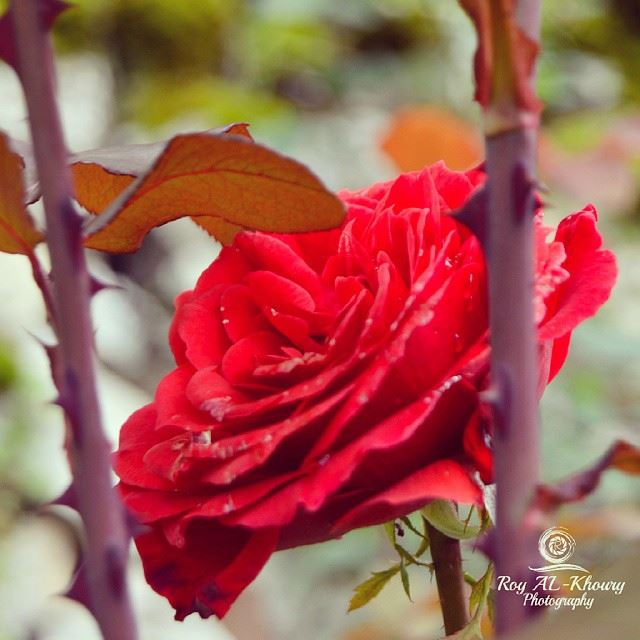 RoyALkhouryPhotography nature beautifullebanon lebanon_hdr ...