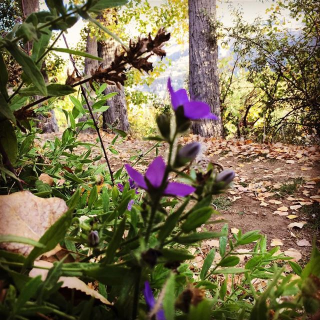 Good morning nature autumn cold weather dead leaves violet flower... (Faraya)