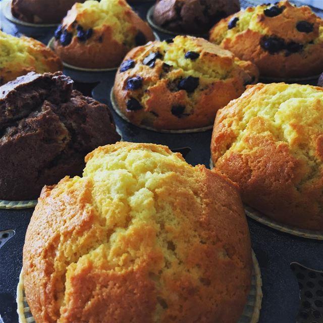 my freshly baked muffins chocolate vanilla apple cinnamon ...