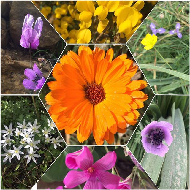 Spring time chez nous a Faraya nature green flowers colors spring...