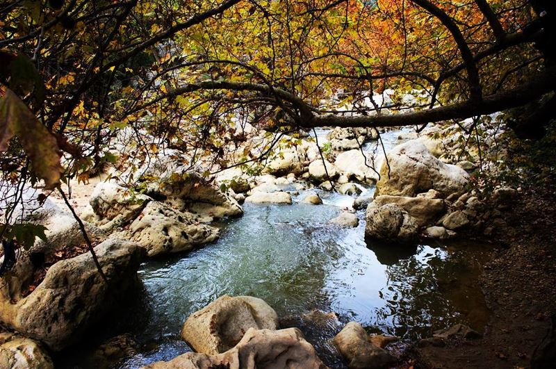 nature river trees rocks water life Lebanon...
