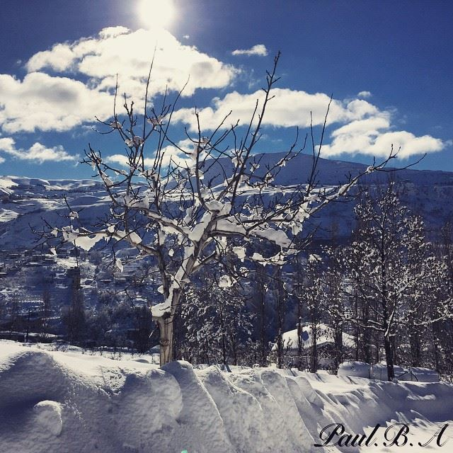 Faraya winter white snow sun blue sky nature tree Lebanon...