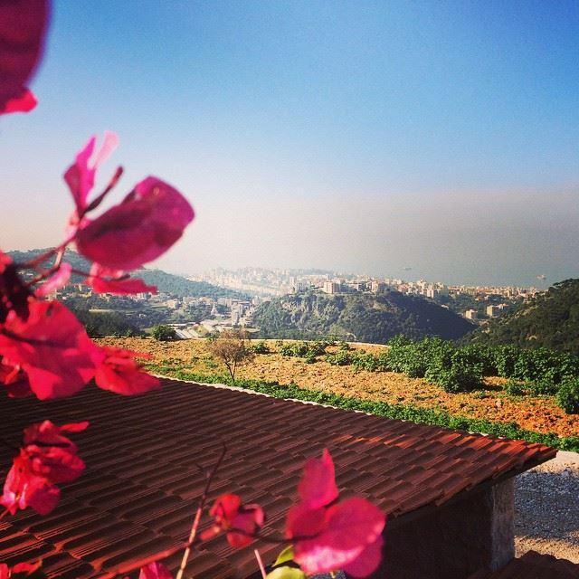 Good Morning Live Love Beirut Lebanon Sun Great Weather Flowers Nature