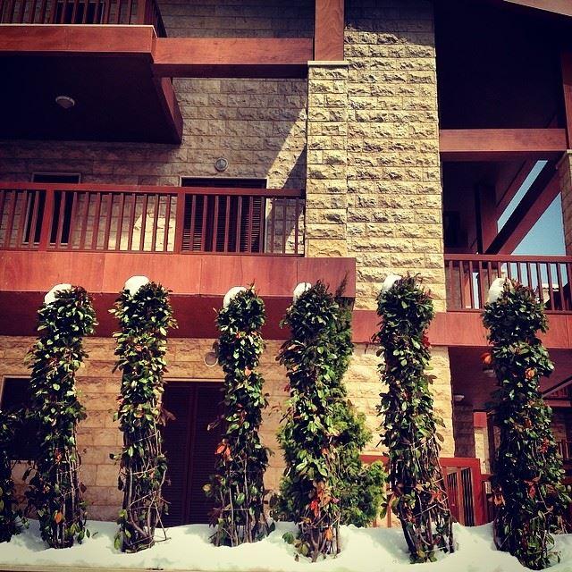 snow hat trees mzar intercontinental Lebanon...