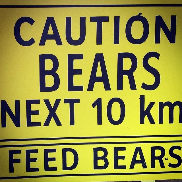 caution bears next 10 km feed bears mzar intercontinental Lebanon...