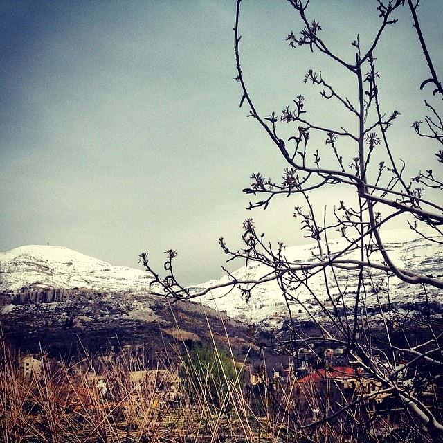 nature green tree snow mountain great weather amazing view faraya Lebanon...
